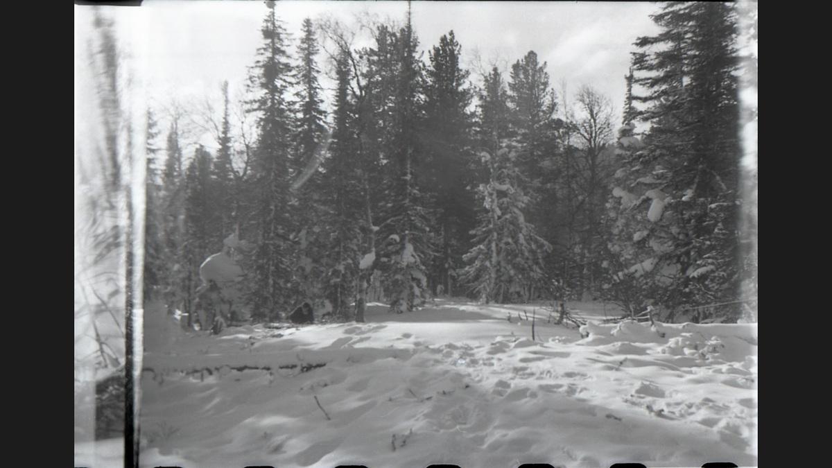 Снежный человек - мифы и факты